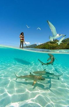 Paddling with reef sharks in the crystal clear waters of Moorea, French Polynesia