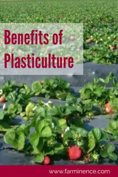 Read how you can incorporate plasticulture into your garden to improve your yields while eliminating chemicals, reducing pests and water usage all in an extremely simple method. Easy Vegetables To Grow, Planting Vegetables, Planting Seeds, Gardening For Beginners, Gardening Tips, Backyard Vegetable Gardens, Fruit Garden, Garden Pests, Garden Fertilizers