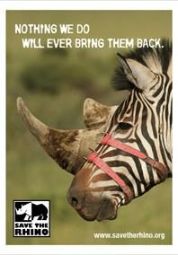 Save the Rhino: Zebra by Stick Animals in Print Ads Social Advertising, Creative Advertising, Print Advertising, Advertising Campaign, Print Ads, Funny Commercials, Funny Ads, Advertisement Examples, Desgin