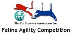 CFA Feline Agility - Agility Training For Your Cat