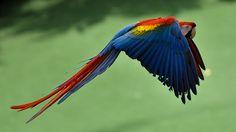 Singapore - bird