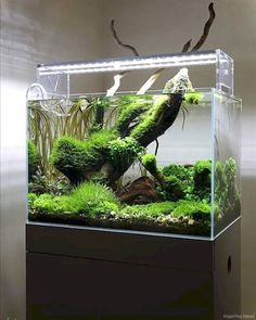 Nice 50 Aquascaping Ideas for Inspirations https://lovelyving.com/2017/11/25/50-aquascaping-ideas-inspirations/