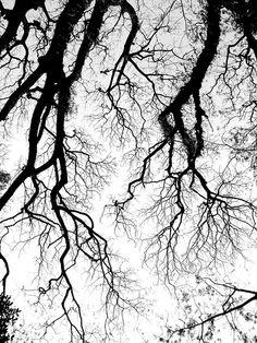 Streams of Black ink - photo by: Kazi Hirok Al-Arafat, Source: Flickr, found with Wylio.com