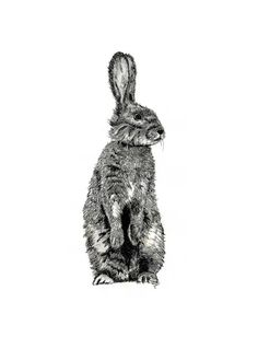 Original drawing pen and ink bunny drawing note cards custom notecards