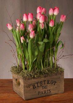 """theperfectworldwelcome: """" black–tulip: """" """" Beautiful !!! \O/ """""""