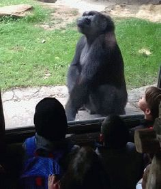 21 Zoo Animals Sharing A Special Moment With Their Visitors