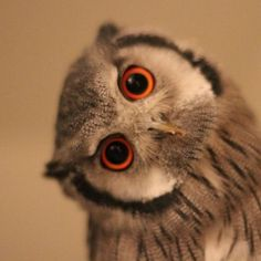 """This owl is saying """"Do what?"""" LOL!"""