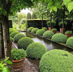 Ahh, balance really is soothing. This is why a row of big topiary domes flanking a path, pond, driveway or exterior steps always work.
