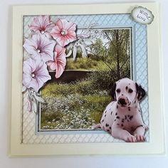 Beautiful Dalmation and Petunias  by Pam Ogilvy