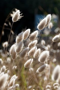 Buy 'Beach Grass' by Frank Moroni as a Greeting Card. Beach Grass, Cactus Planta, Ornamental Grasses, Seed Pods, Amazing Flowers, Flower Making, Belle Photo, Land Scape, Garden Landscaping
