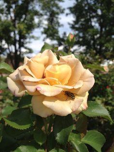 Hiding bee