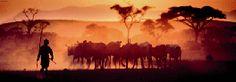 14,96 € Kalahari Desert (Panorama)