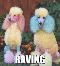 Paint by number poodles