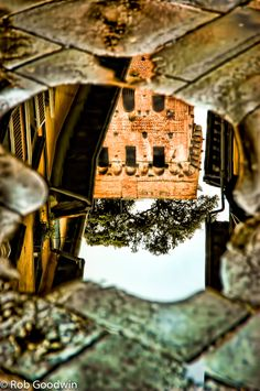 Torre Guinigi, Lucca, Italy via reflection in a puddle after rainfall showing the 2 trees