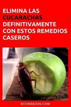 9 Ideas De Cucarachas Y Moscas Cucarachas Remedios Para Cucarachas Recetas De Limpieza