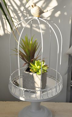 French white bird cage decoration plant pallet decoration...LOVE this! combines Indian and French influences