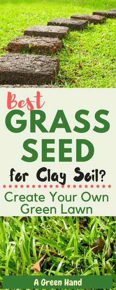 Which is the best grass seed for Clay soil? Create Your own Green Lawn #grassseed #lawncare #claysoil #gardening #gardeningtips #organicgarden #agreenhand