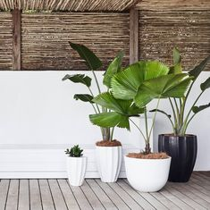 Contemporary and minimalist, concrete planters offer stylish functionality to the indoor or outdoor space. #CocoRepublic #nature #outdoors #summer #plants
