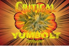 #w33daddict #Hybrid #Indica #Sativa #AfghaniKush #Kush #Skunk #Critical #MauiWowie #WhiteWidow #WhiteRhino #Herbs #SourDiesel #PurpleHaze #GreenThumb #Chronic #HinduKush #KolaGold #DurbansPoison #BananaKush #MasterKush #BlueDream #OGKush #SuperLemonHaze ...