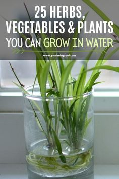25 Herbs, Vegetables & Plants You Can Grow In Water | 1004