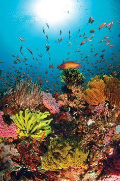 U = under the sea ocean life Under The Ocean, Sea And Ocean, The Sea, Beautiful Ocean, Amazing Nature, Stunningly Beautiful, Underwater Photography, Nature Photography, Marine Photography