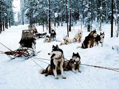 France Hotels - Amazing Deals on Hotels in France Voyager C'est Vivre, Hotels In France, Lapland Finland, A Husky, Dog Crafts, Working Dogs, Extreme Sports, Ski, Winter Travel