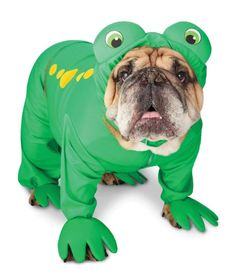 Bulldog Frog Costume (Bullfrog) Fionna can be the princess and Herculese can be the frog! Pet Halloween Costumes, Animal Costumes, Pet Costumes, Dog Halloween, Halloween Treats, Funny Dogs, Funny Animals, Cute Animals, Colorful Animals