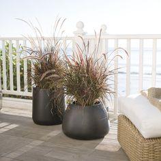 saabira-fiberstone-short-plante