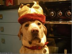 Funny doggie with a crown!