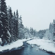 snow, nature, and winter image