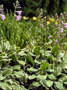 Perennial Planting Guide Tips for planting, storing perennials prior to planting, selecting digging tools, and mulching.