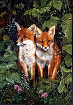 Fox cubs by sue warner Fuchs Baby, Fennec, Pub Vintage, Fantastic Mr Fox, Fox Decor, Fox Pattern, Fox Art, Art Graphique, Red Fox