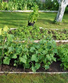 The Secret Garden, Organic, Plants, Plant, Planets