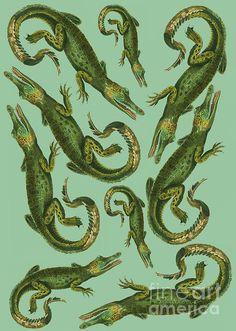 Crocodiles Print by Donovan OMalley