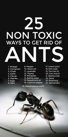 Household Cleaning Tips, Cleaning Recipes, Cleaning Hacks, Get Rid Of Ants, Ant Killer Recipe, Bug Spray Recipe, Diy Pest Control, Natural Pesticides, Insect Pest