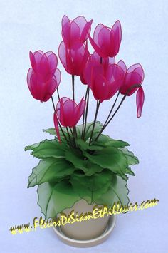 PHOTO ONLY ~ Cyclamen