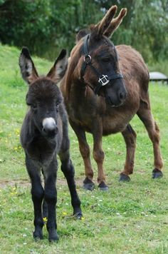 Donkey Visit our page here: http://what-do-animals-eat.com/donkeys/