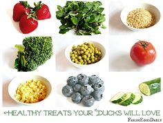 Healthy Treats for Backyard Ducks