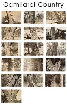Carved trees of First Nations Peoples from Western New South Wales Aboriginal Symbols, Aboriginal Culture, Aboriginal People, Aboriginal Art, Indigenous Education, Indigenous Art, Black History, Art History, Australian Aboriginal History