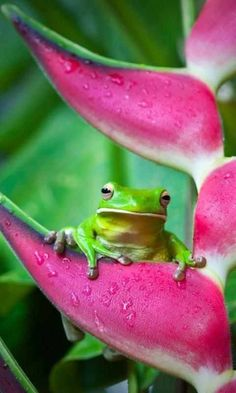 Whoa!!! This frog is out of control with excitement!!!
