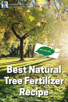 PBS-TV's Garden Rx starring Loren Nancarrow reveals his homemade tree fertilizer recipe and how to apply fertilizer around your tree for maximum absorption.
