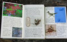 more nature journal pages (explored) Garden Journal, Nature Journal, Homemade Books, Love Doodles, Cute Journals, Nature Study, Scrapbook Journal, Art Journal Pages, Smash Book