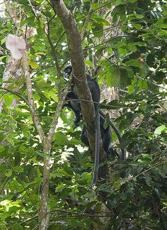 Dschungelabenteuer im Penang Nationalpark