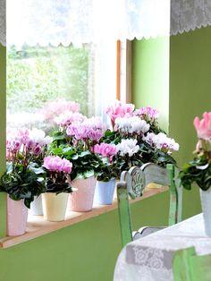 O verde dentro de casa ~ decoração e ideias