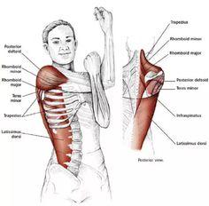 15 Estiramientos para aliviar la tensión en el cuello y los hombros - Mundoamores Pilates, Stretching, Fitness, Gym, Workout, Yoga, Physical Therapy, Medicine, Posture Exercises