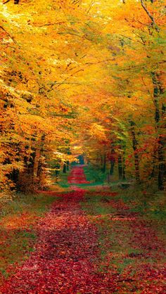 Autumn Forest. Germany