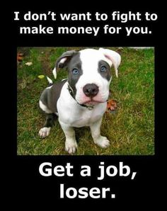 Uplifting So You Want A American Pit Bull Terrier Ideas. Fabulous So You Want A American Pit Bull Terrier Ideas. Pit Bull Terriers, Bully Terrier, Amor Animal, Mundo Animal, I Love Dogs, Puppy Love, Nice Dogs, Perros Pit Bull, American Staffordshire Terriers