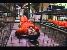 Yasin Bay - Mos Def -Torture -The Guantanamo Guidebook