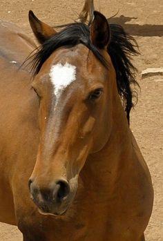 Cassie, a Mustang.