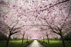 "My photo ""Nangijala"". Shot in Copenhagen doing spring. One of my favorites."